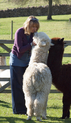 Trudy with Alpacas